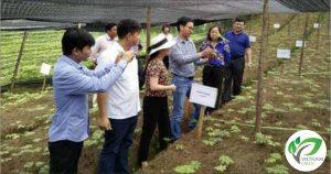 Đoàn học viện nông lâm tham quan nghiên cứu phát triển cây tam thất